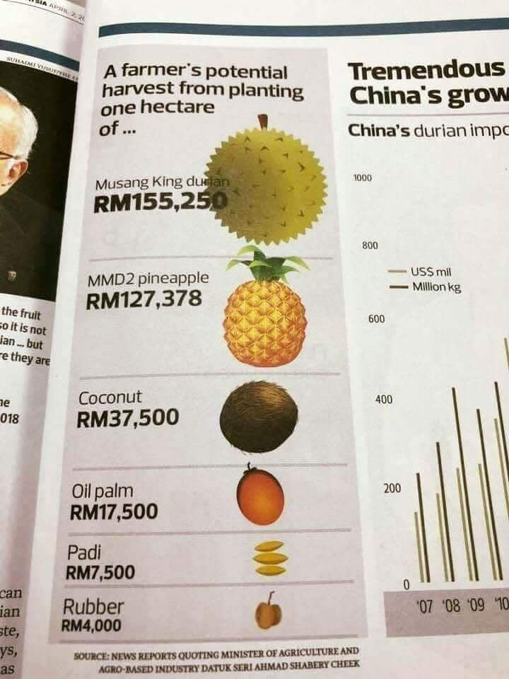 Anggaran Pendapatan Durian Musang King RM155,250 Sehektar, Paling Tinggi Dari Komoditi Lain
