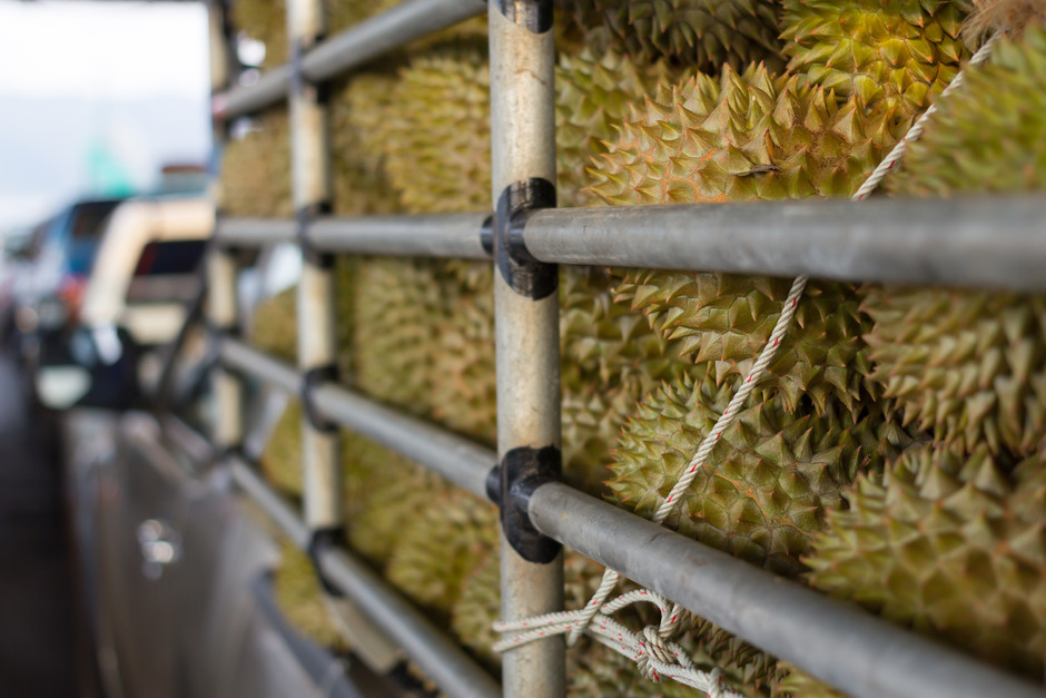 Malaysia cashes in as China goes bananas for durians