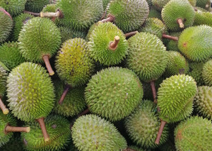 Malaysian 'Designer Durians' Are Carving Out Niche in China