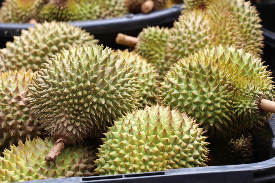 Durians could become major commodity export for Malaysia, says Dr M