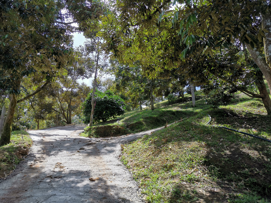 Road Constriction into Final Stage Reveal New Look for FruitFarm 道路工程进入最后阶段 花果山展现全新面向