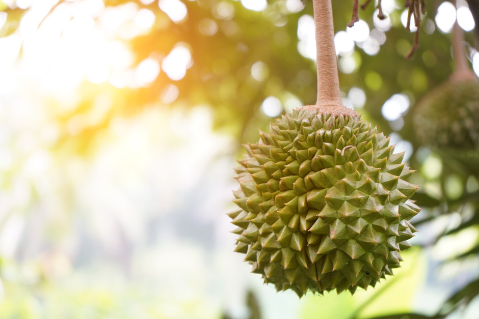 Exploring the Nutritional Contents and Benefits of Durian (Durio Zibethinus)