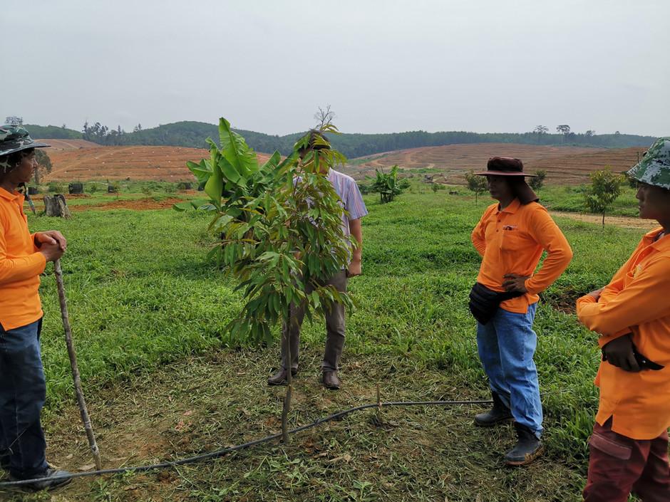 EcoFarm Create Beautiful Home for Durian Trees 易盛园展开挖池工程 打造榴梿树美好家园