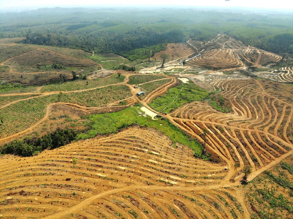 Eco Starland Group - Focus on Perfection易盛集团专注完美 种植极品榴梿