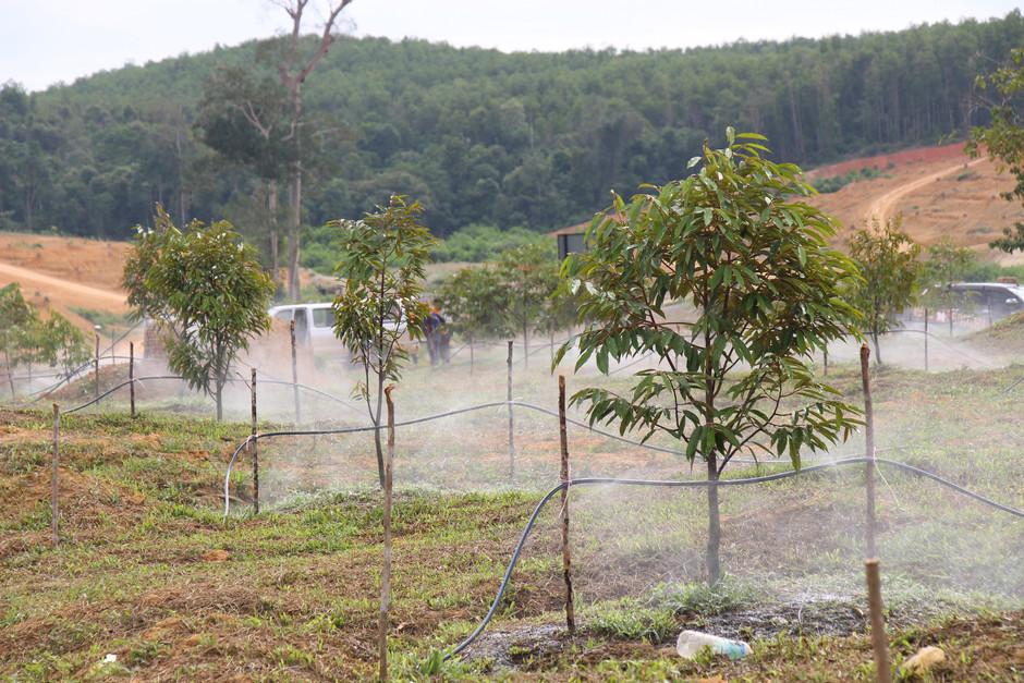 Setting Up the Irrigation System 设置灌溉系统 推土起箱种苗