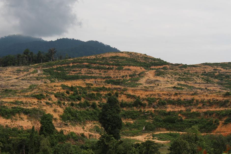 Looking for high quality durian plantations 寻觅优质的榴梿种植宝地