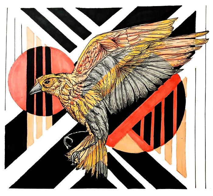 illustrationbird2.jpg
