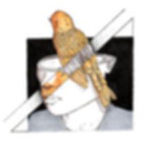illustrationbird.jpg