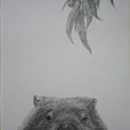 wombat crop.jpg