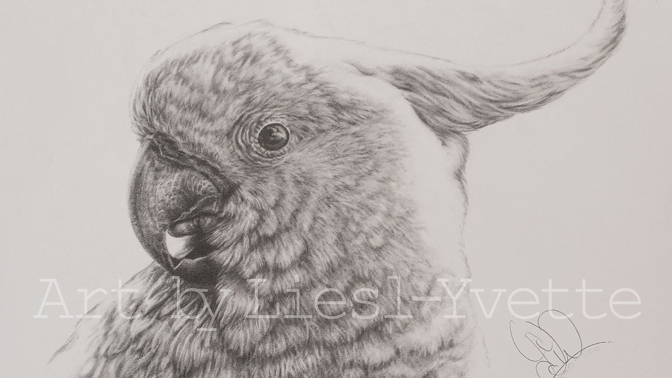 Original Drawing - Cockatoo