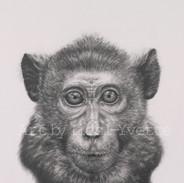 monkey watermarked.jpg
