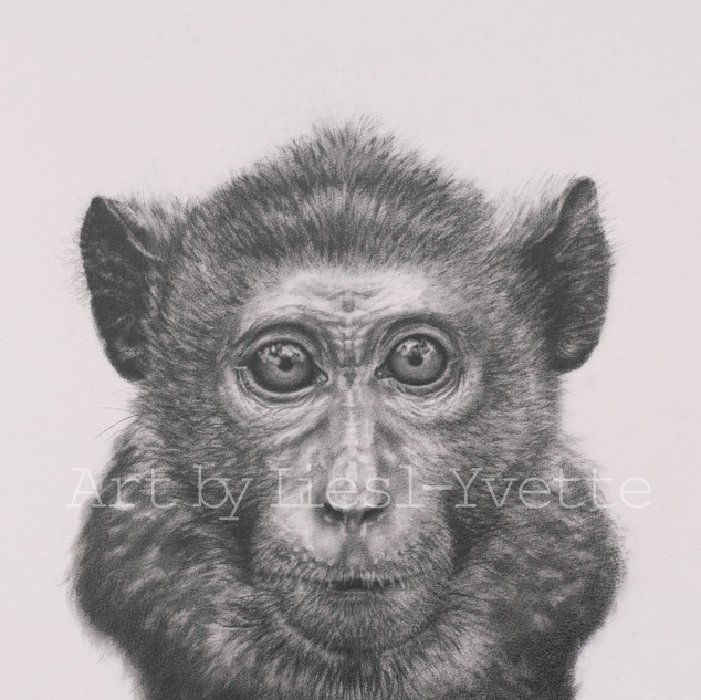 monkey watermarked.jpg