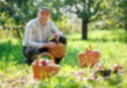 man holding a basket of apples farmer