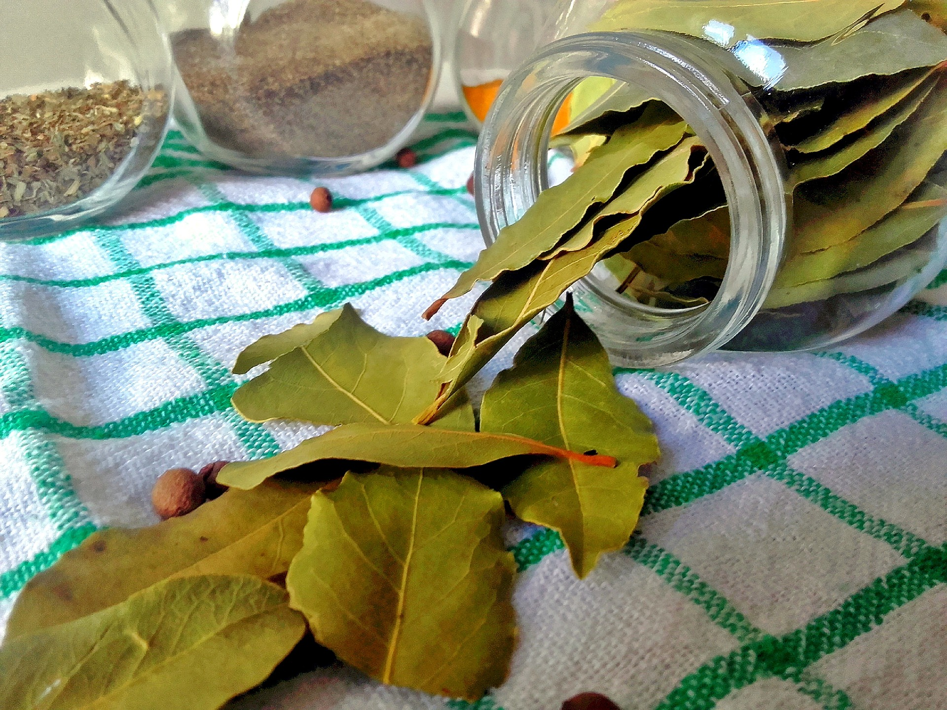 bay-leaf-2942399_1920