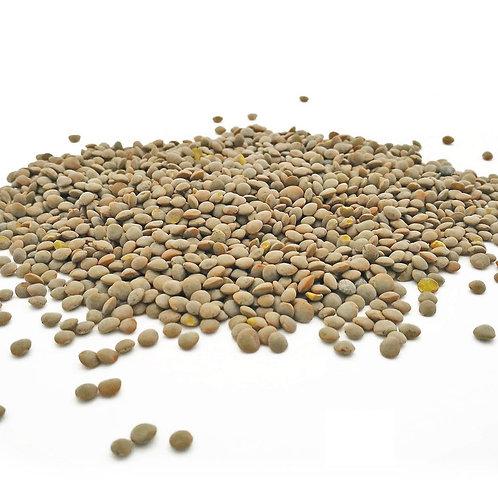 UK grown Little Olive Green Lentils (500g)