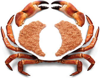 BROWN CRAB MEAT 454G