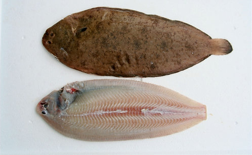CORNISH DOVER SOLE 300-400G FROZEN