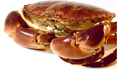 WHOLE COOKED CORNISH BROWN CRAB 900-1.1KG