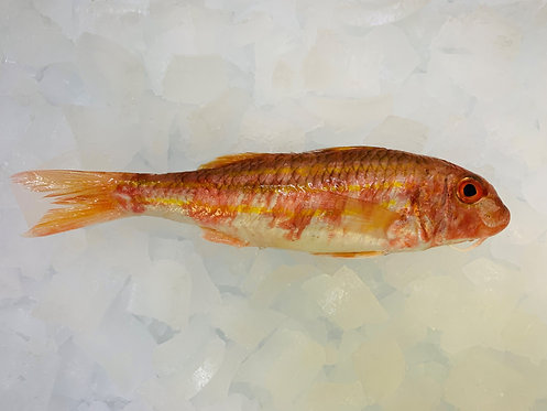 CORNISH RED MULLET