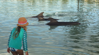 Rise and Shine with Dolphins at Atlantis