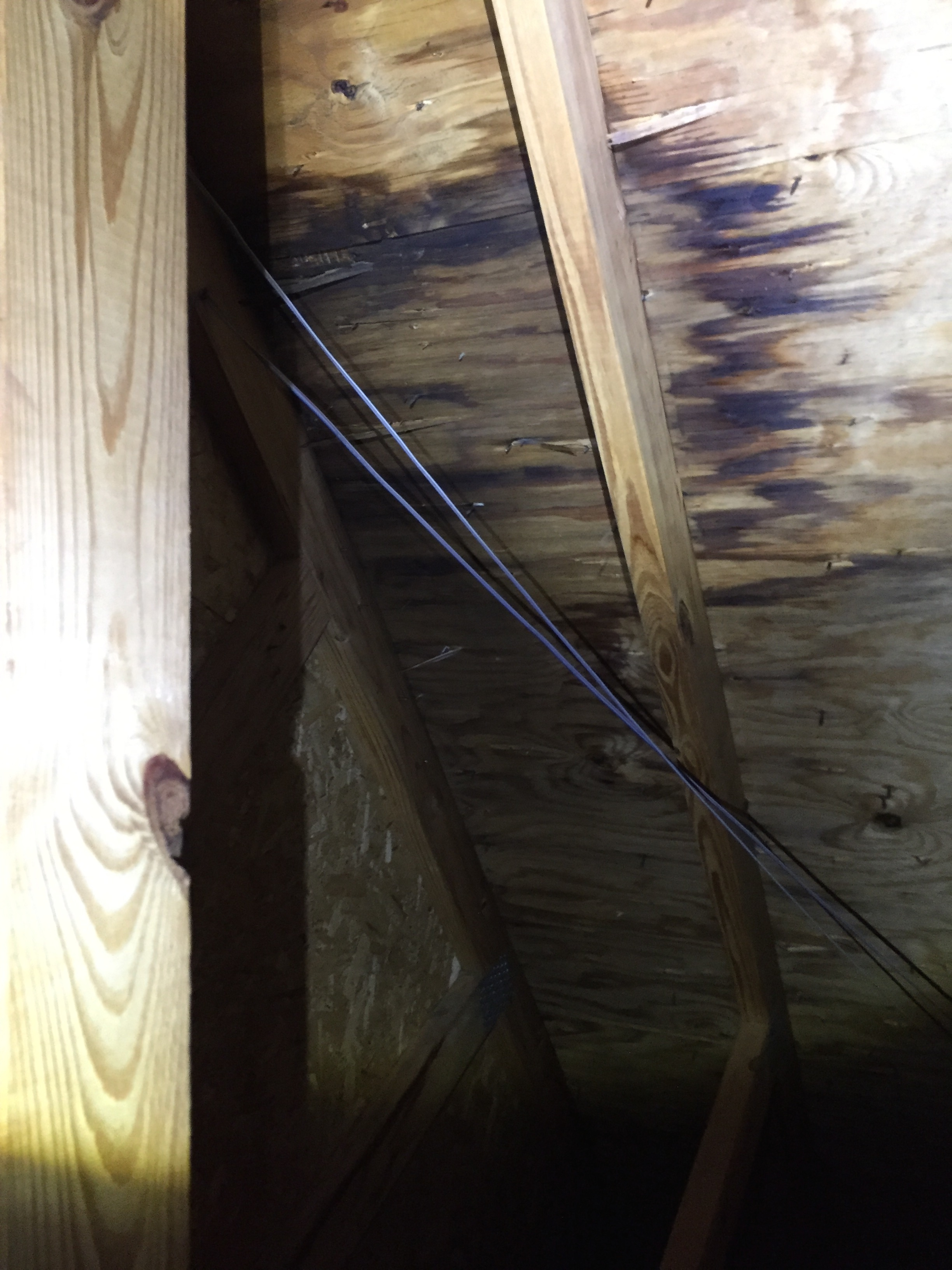 Roof leak water damaged sheathing
