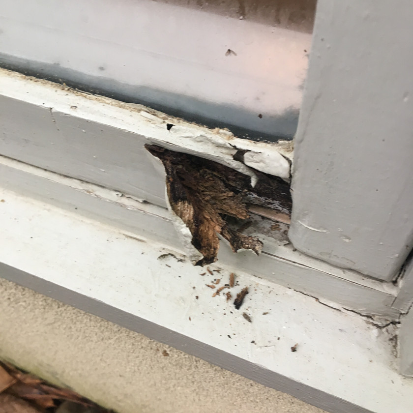 window wood rot