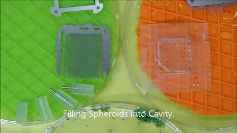 3次元培養キット使用方法説明