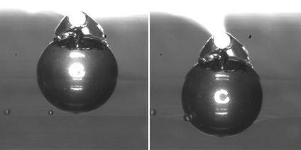 強度測定 球状での押し込み試験