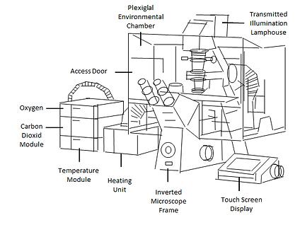 従来の蛍光顕微鏡