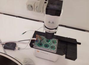 In-vitro-exercise-model-web-300x219.jpg