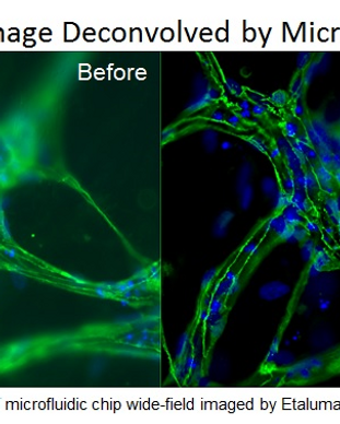 Microvolution-before-after-170724.png