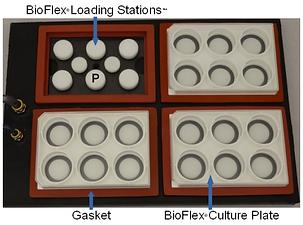 bioflex1.png