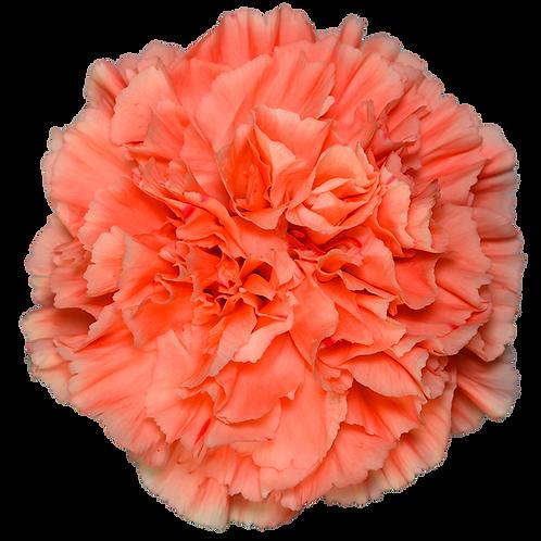 Orange Hermes