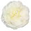 Thumbnail: Dilleta Crema