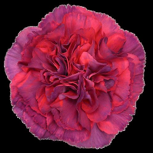 Metallica Rose