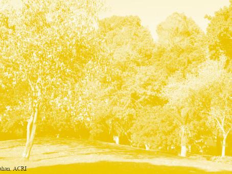 פארקים ציבוריים - בקרוב לעשירים בלבד?