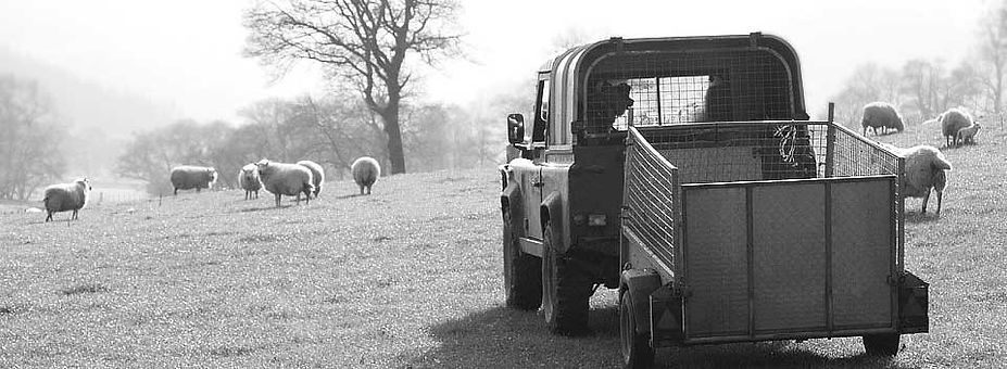 landrover and trailer