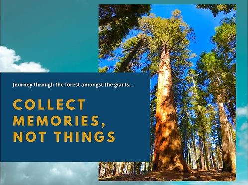 Sequoia NP Postcard