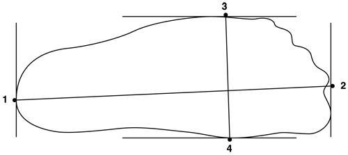 foot-measurement