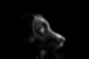dog-4118585__340.webp