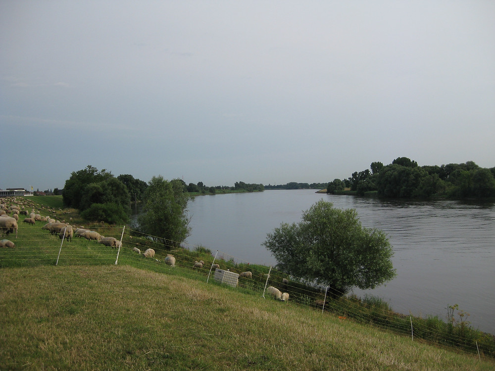淀川と似ているエルベ川の風景