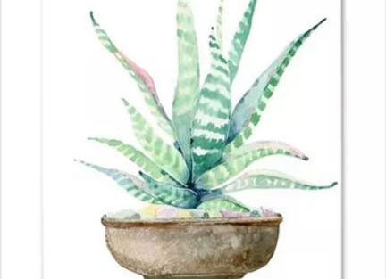 Acuarela nórdica cactus 40x50cm