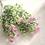 Thumbnail: Ramo flores silvestres