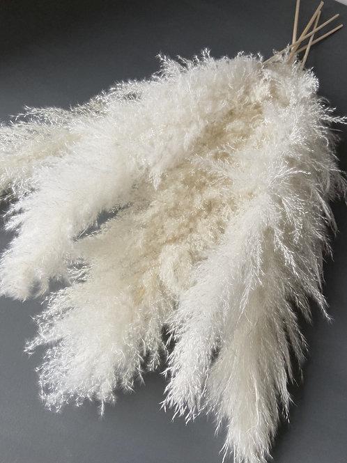 Fluffy White Pampas