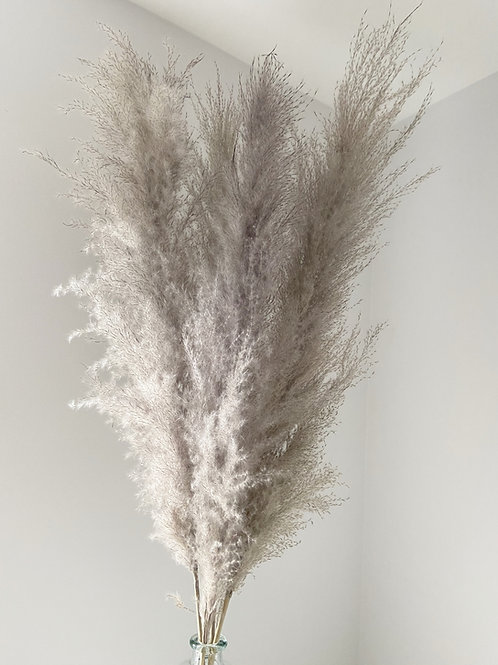 DISCOUNTED Fluffy Beige/Grey Pampas