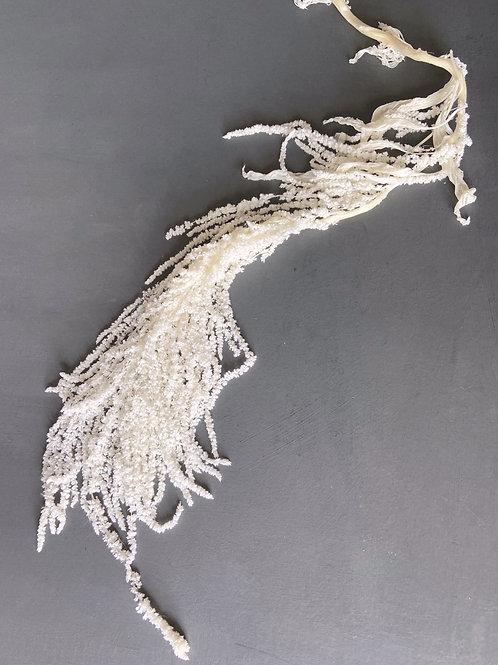 Preserved Hanging Amaranthus