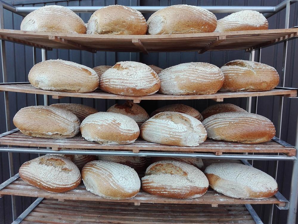 Vloerbrood vers uit de oven.