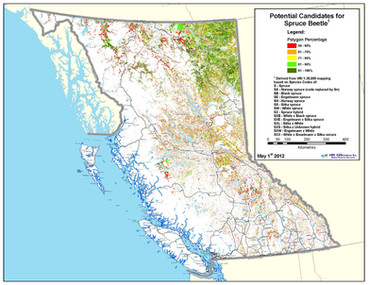 Potential Candidates for Spruce Beetle