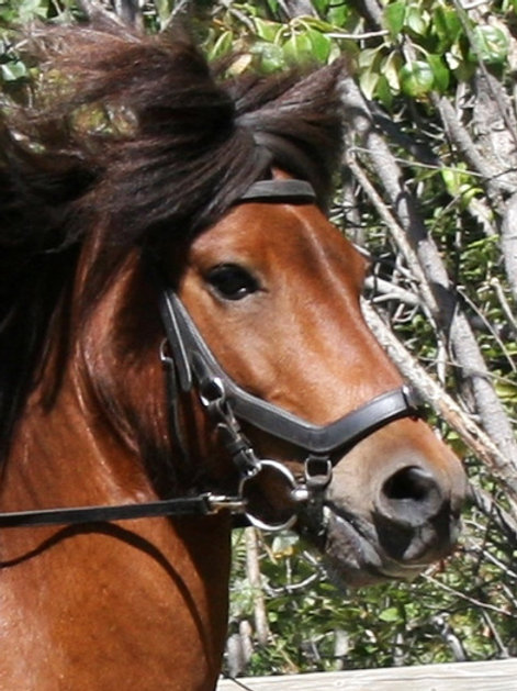 Training Bridle
