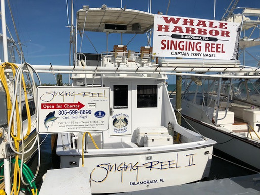 Did you know... That the Singing Reel II was featured in the Netflix show Bloodline.  Florida Keys